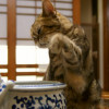 Japan's first cat cafe