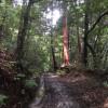 Ancient Walks on Japan's Oldest Road