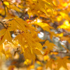 Five Top Tips  for a Fabulous Fall