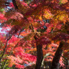 Red, Leafy Locations for Your Autumn Itinerary