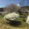 Return of the Okayama Villas