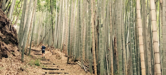 Bamboo forest running trail