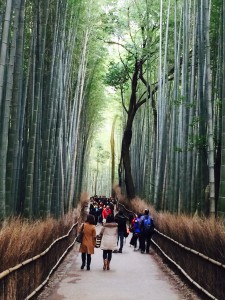 Arashiyama Bamboo-Celia