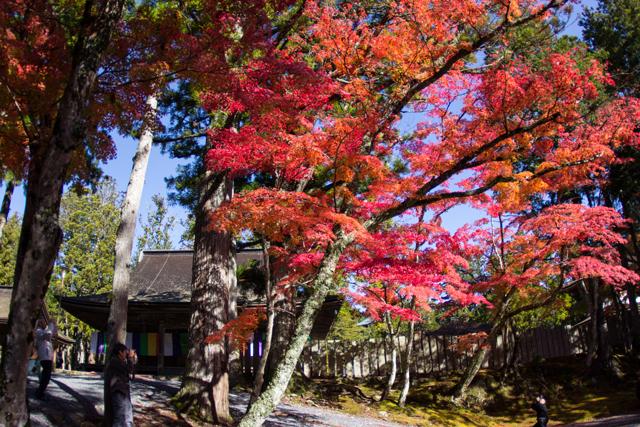 07-koyasan-fall-leaves-jason-haidar